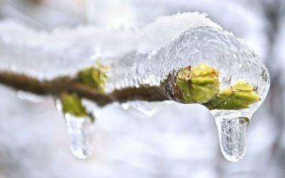 Is uw tuin al winterklaar?
